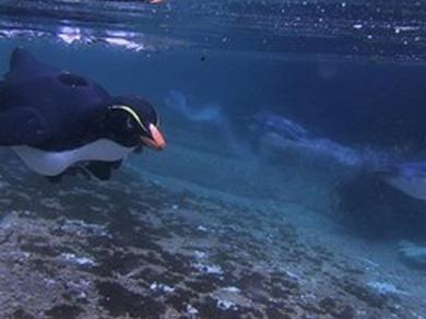 underwater PenguinCam
